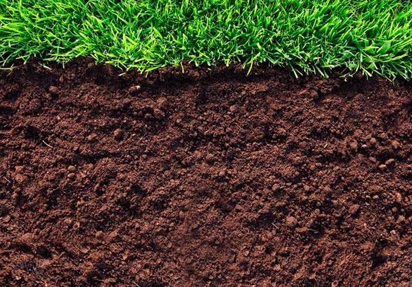 Изменение состава почвы