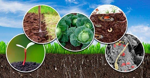 Как увеличить плодородность и сохранить здоровье земли